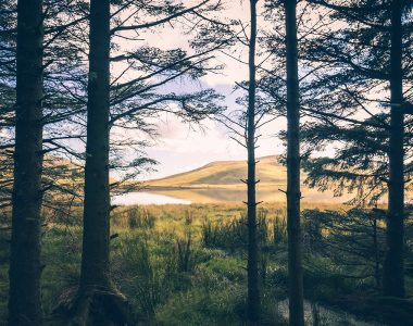 Out of the Woods - Landscape Photography Northern Ireland